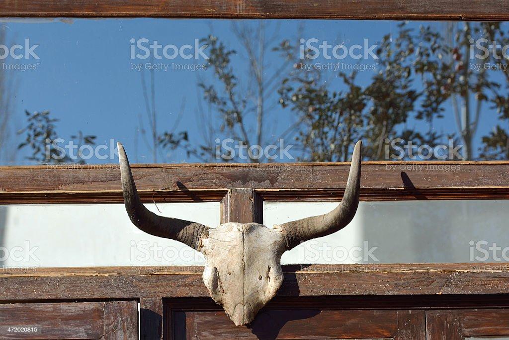 Yak skull decorated in hotel, Leh city, India royalty-free stock photo