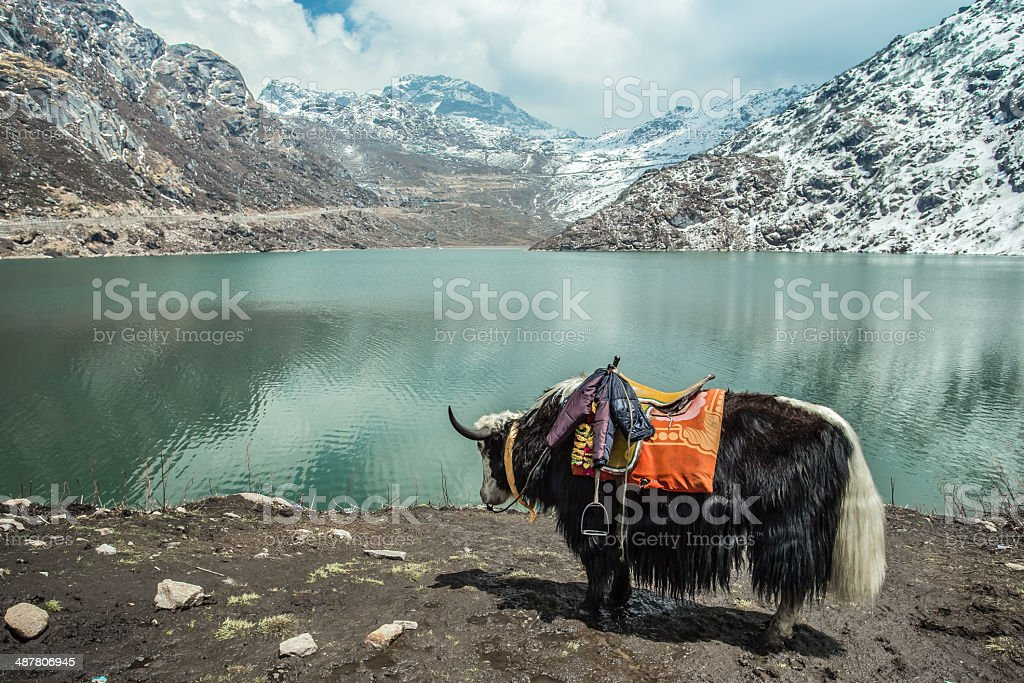 Yak Tsangmo Lake stock photo
