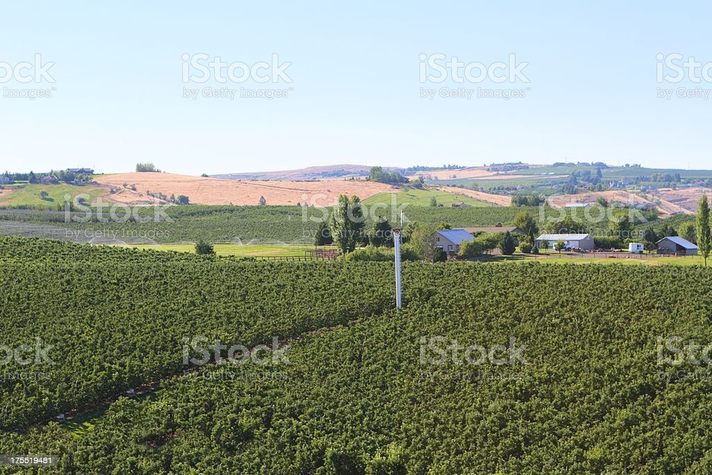 Yakima apple farms stock photo
