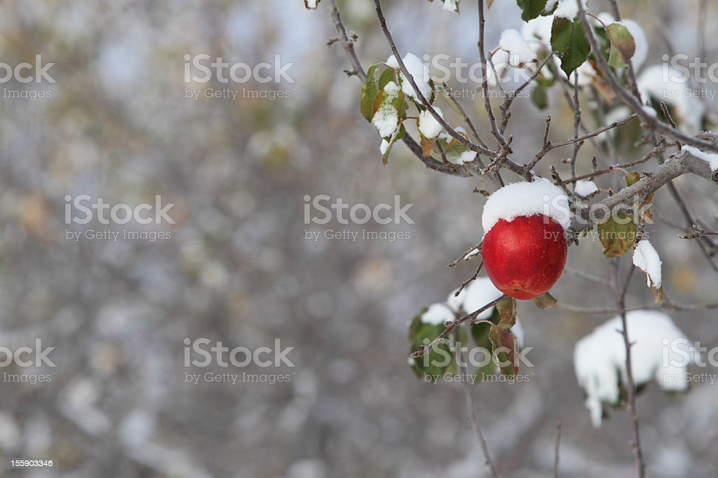 Yakima apple orchard stock photo