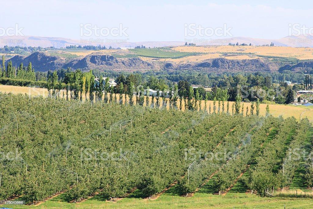 Yakima County apple farm royalty-free stock photo