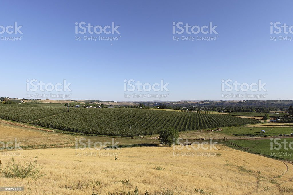 Yakima Valley farms stock photo