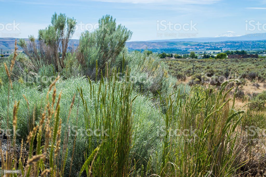 Yakima valley landscape stock photo