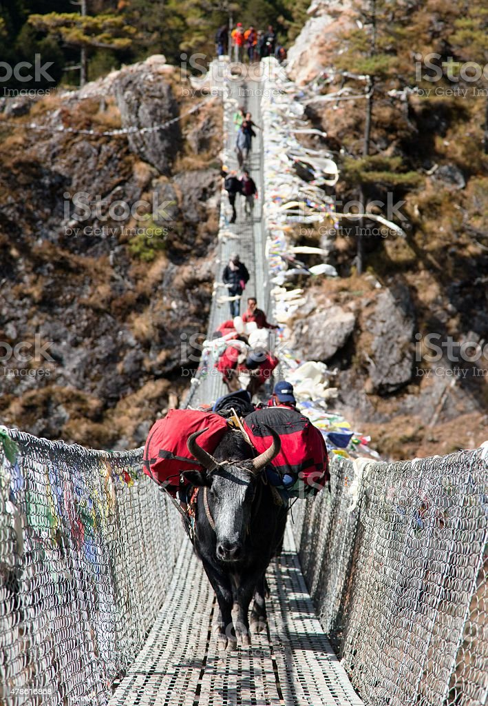 Yaks and people on hanging suspension bridge stock photo