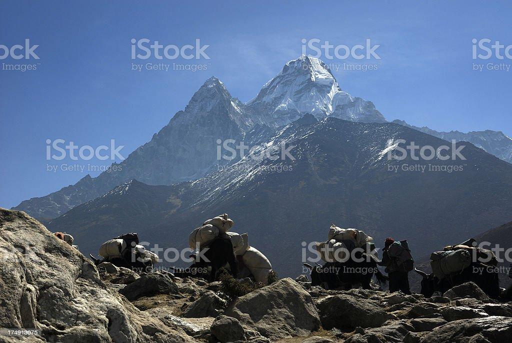 yaks, porter and Ama Dablam royalty-free stock photo