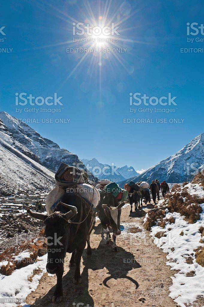 Yaks Sherpas snow mountain sunburst Himalaya trail Nepal royalty-free stock photo