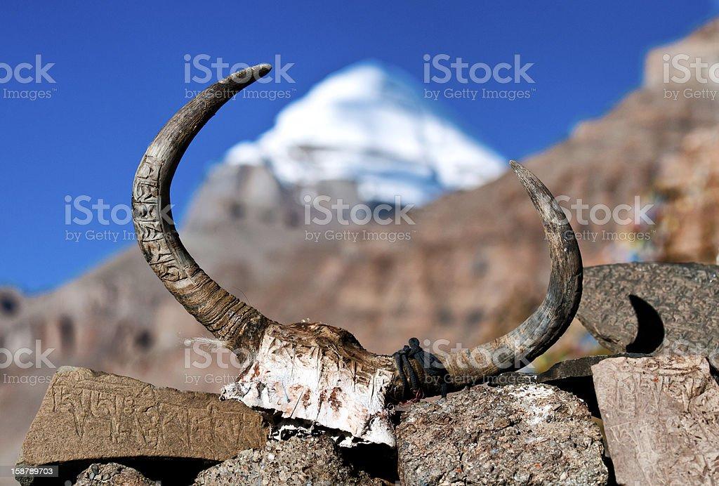 Yak's skull royalty-free stock photo