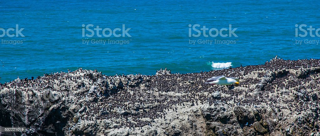 Yaquina Head Lighthouse - Oregon stock photo