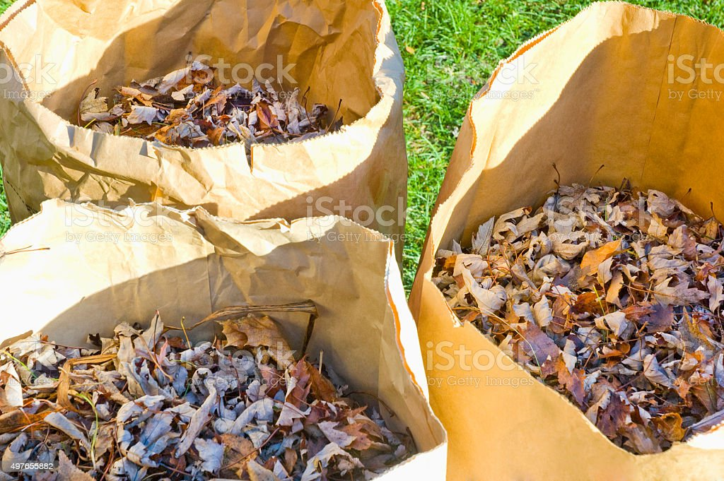 Yard bags with leaves stock photo