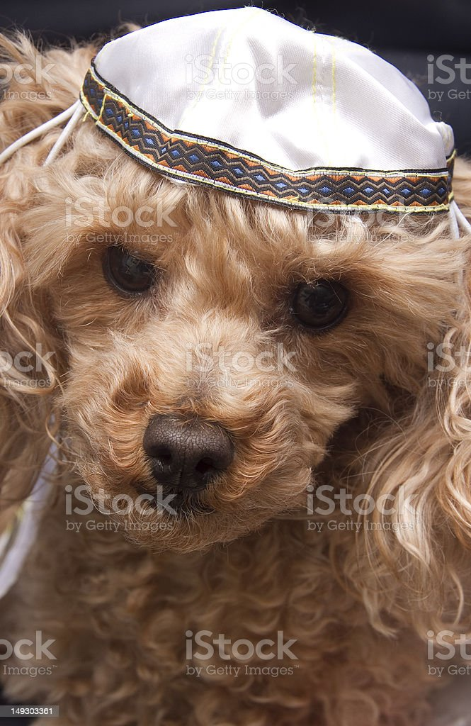Yarmulke Face royalty-free stock photo