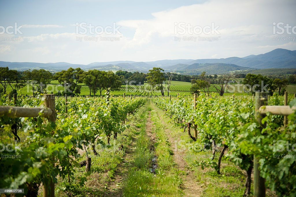 Yarra Valley Winery stock photo
