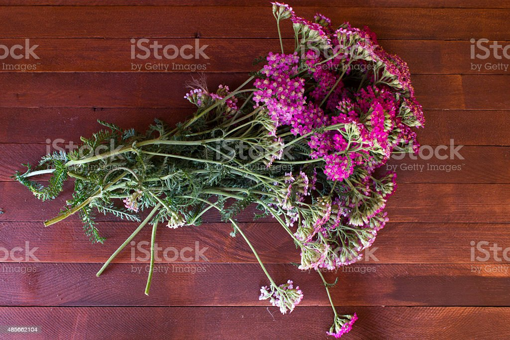 yarrow flower, herbal plants on wooden table stock photo