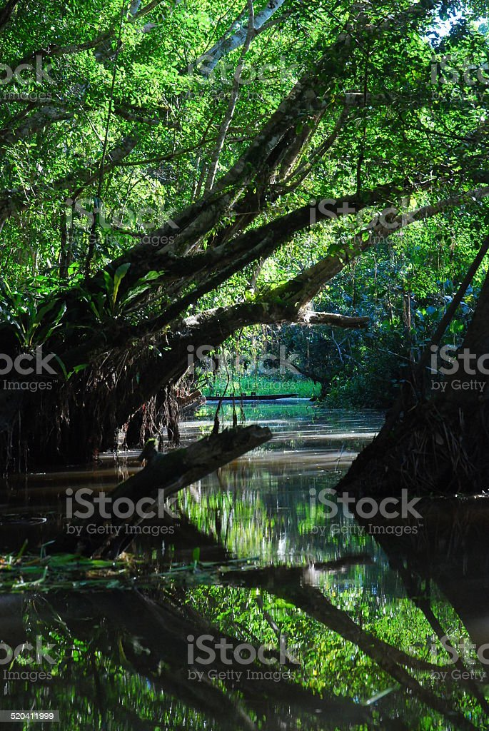 Yasuni National Park royalty-free stock photo