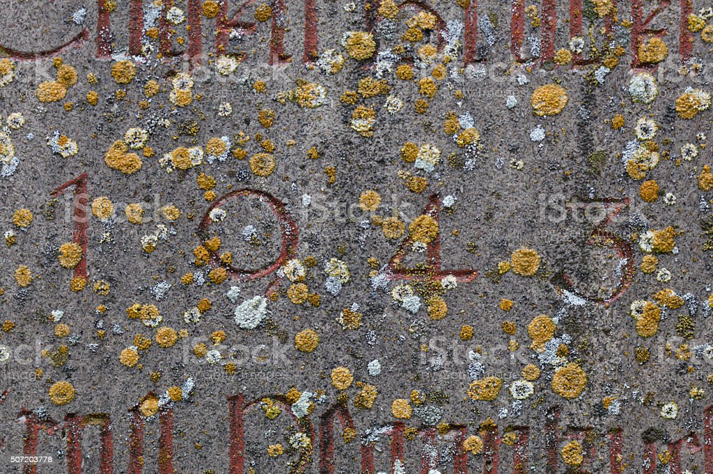Year 1943 carved in stone covering with moss stock photo
