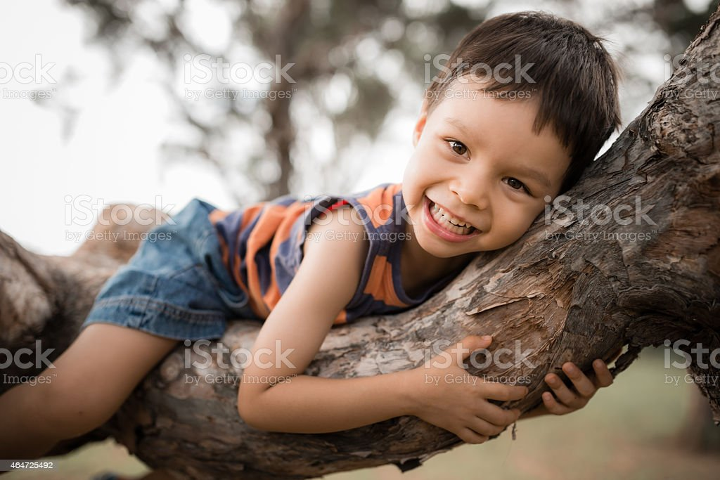 4 year old boy sits in a tree stock photo