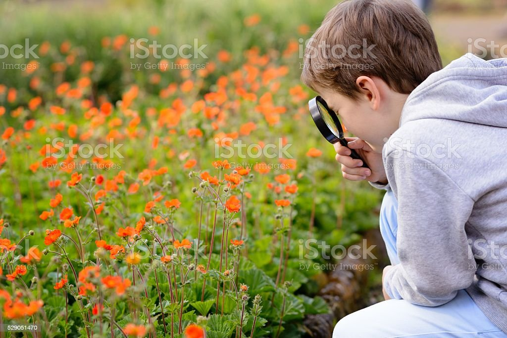7 years boy looks at the colorful flowers stock photo