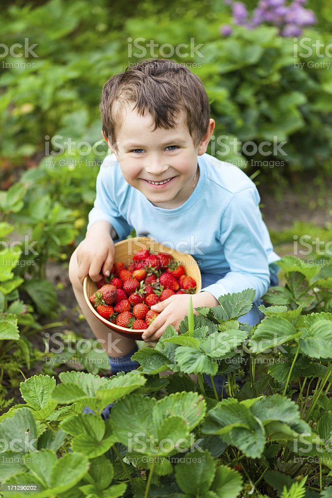 5 years old boy with fresh strawberries stock photo