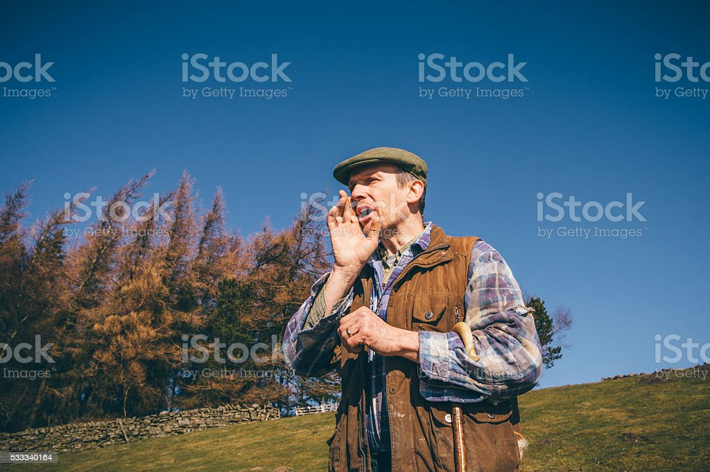 Yelling for the Sheepdog stock photo