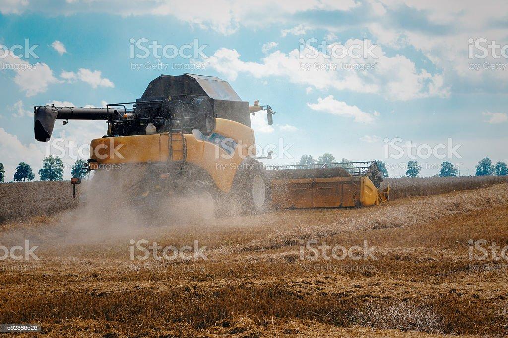 Yellov harvester on field harvesting gold wheat stock photo