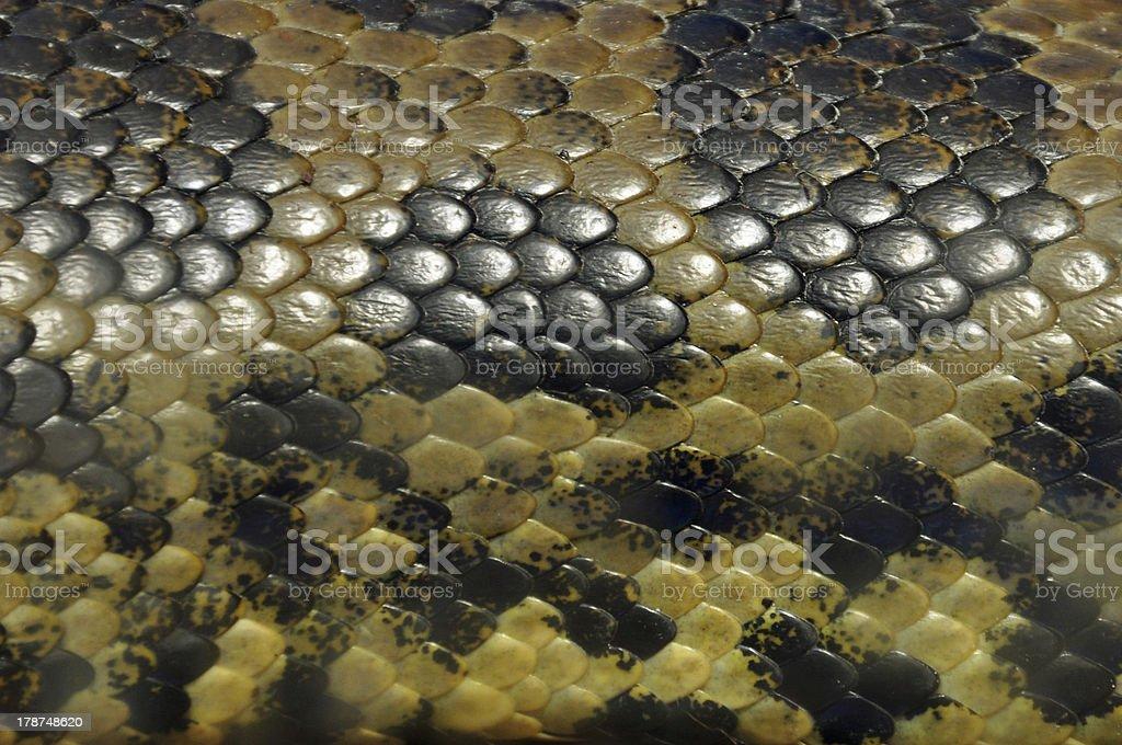 yellow anaconda snake skin background royalty-free stock photo
