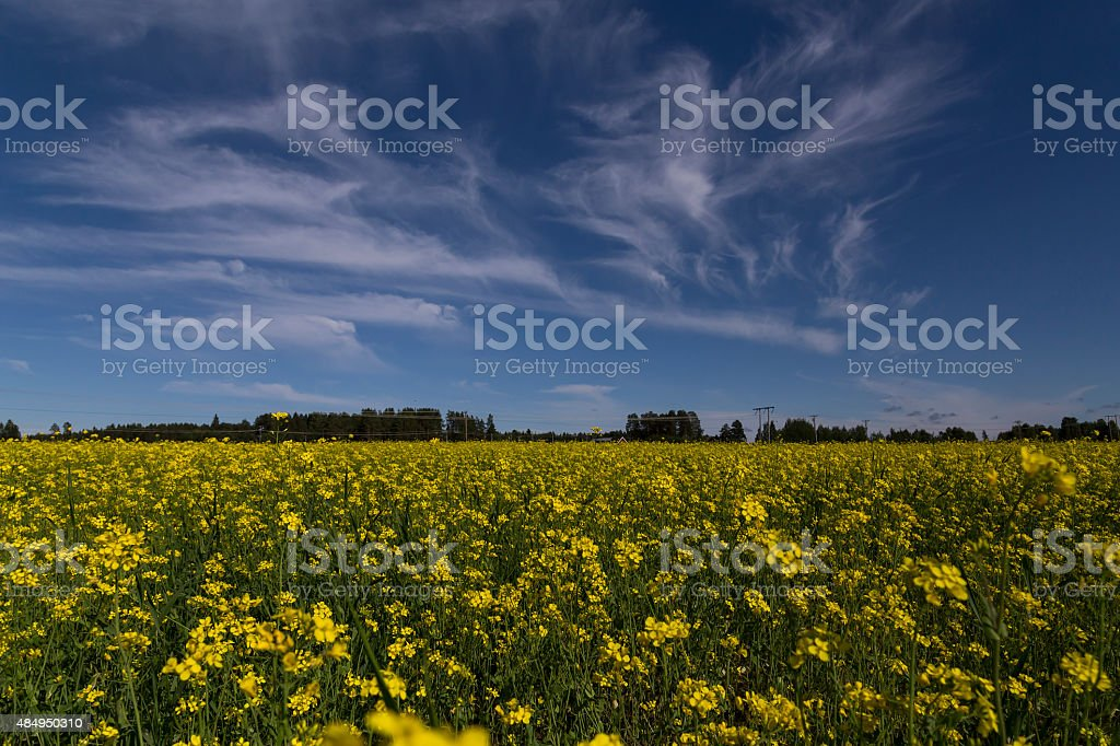 yellow and blue royalty-free stock photo