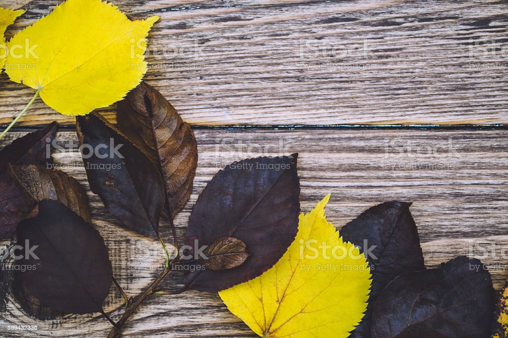 Yellow and gray leaves on wooden background stock photo