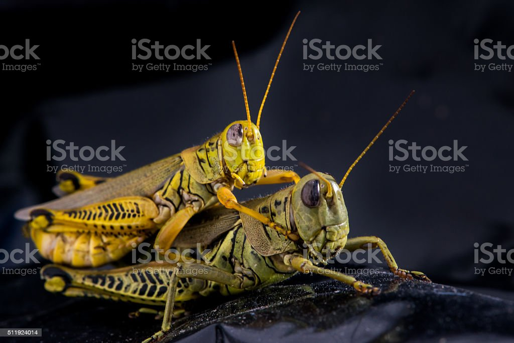 Yellow and Green Grass Mates stock photo