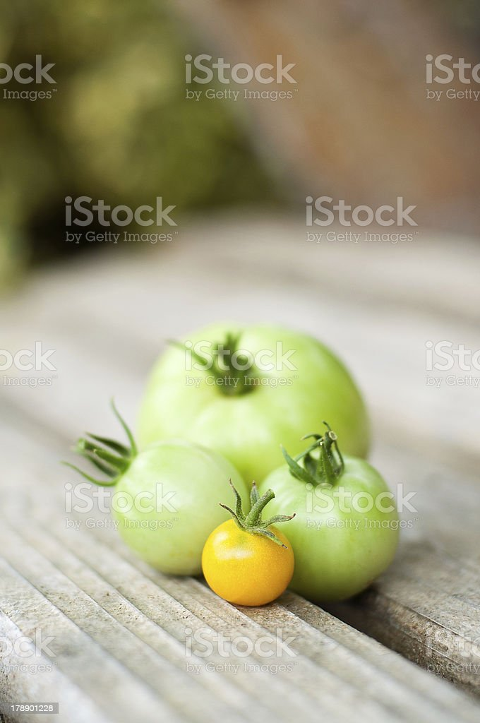 Yellow, and green tomatoes royalty-free stock photo