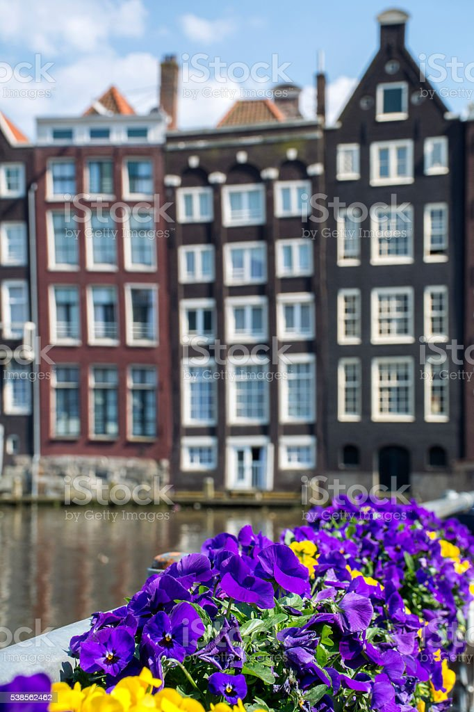 Yellow and purple violets with historical houses as background stock photo