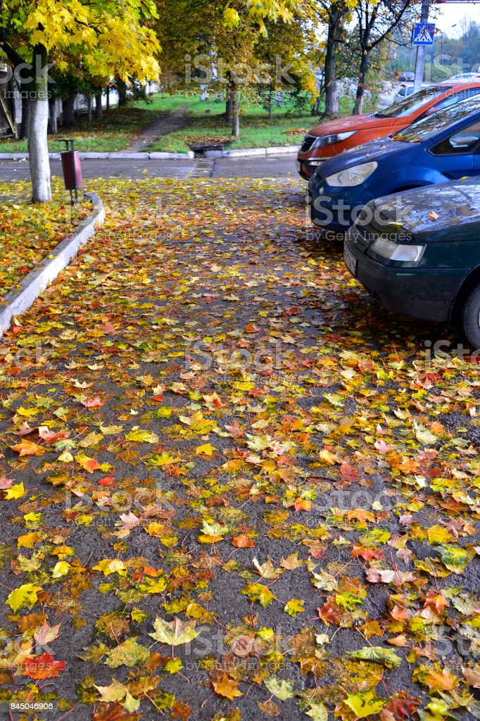 Yellow and red autumn leaves, fallen on asphalt and cars stock photo