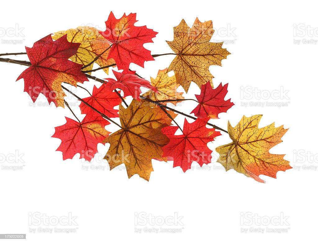 Yellow and red autumn leaves isolated on a white background royalty-free stock photo