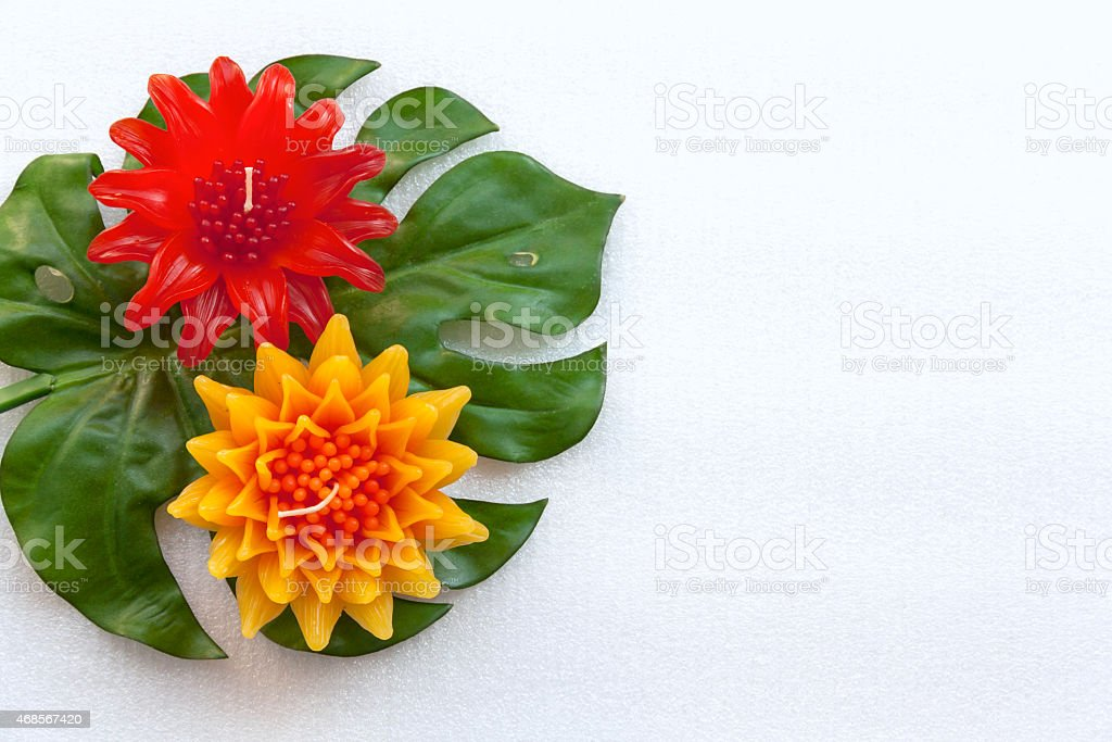 Yellow and red flower on green leaf royalty-free stock photo