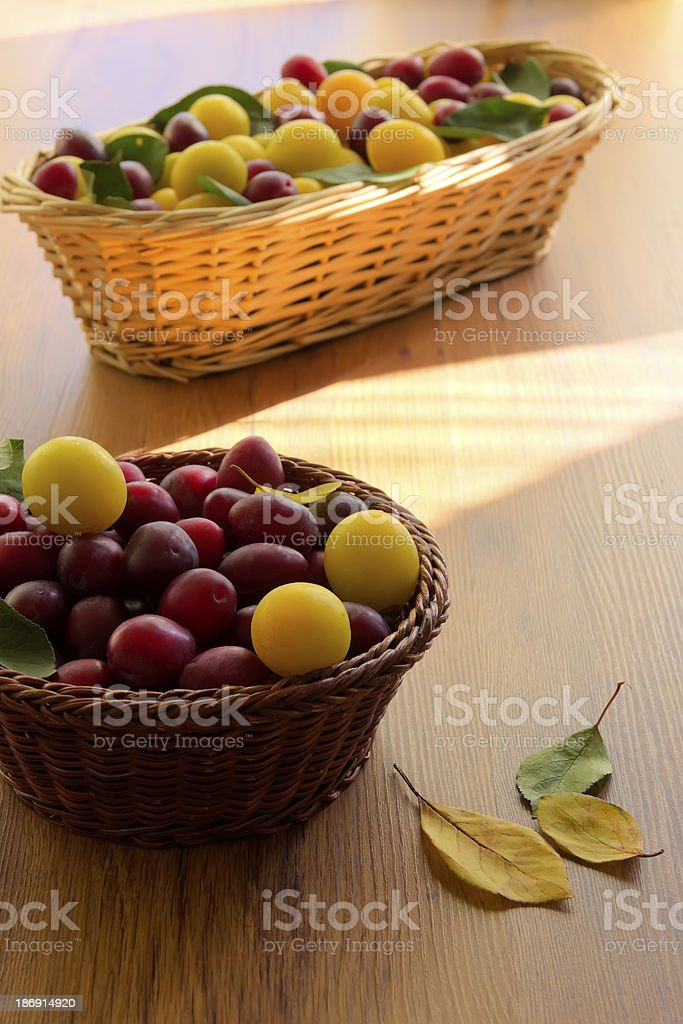 Yellow and red honey plum royalty-free stock photo