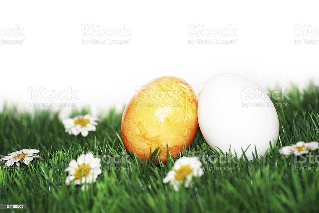Yellow and white egg stock photo