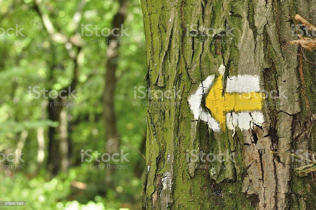 Żółty i biały szlaku turystycznego znaki Symbole na drzewo zbiór zdjęć royalty-free