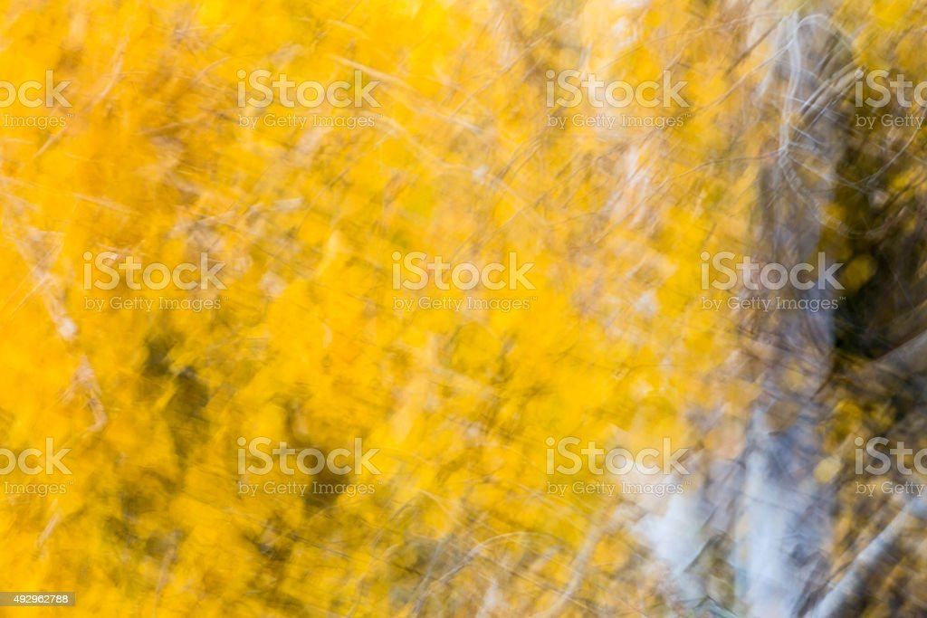 Yellow Aspen Leaves stock photo