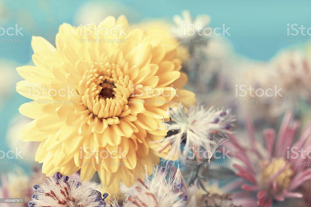 yellow aster close up stock photo