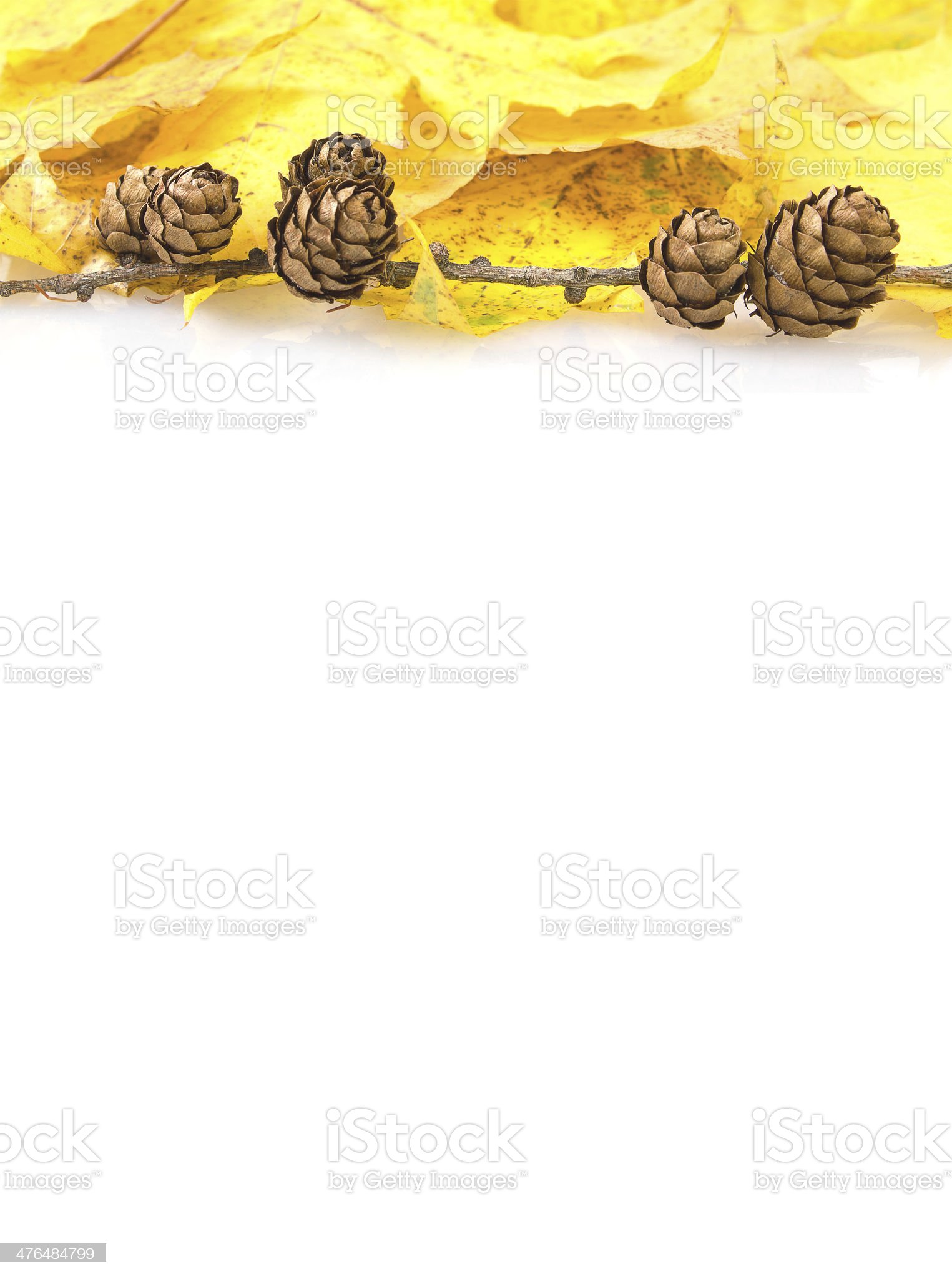 yellow autumn leaves and pine cones frame royalty-free stock photo