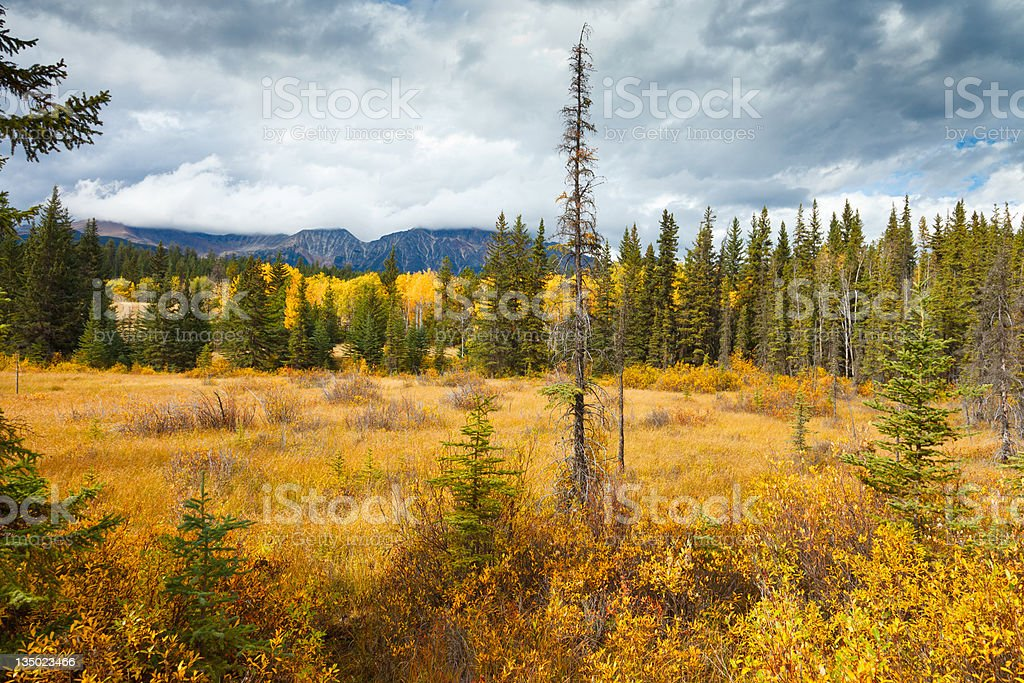 Yellow Autumn stock photo
