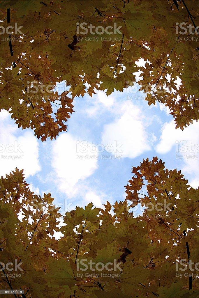 Yellow autumn royalty-free stock photo