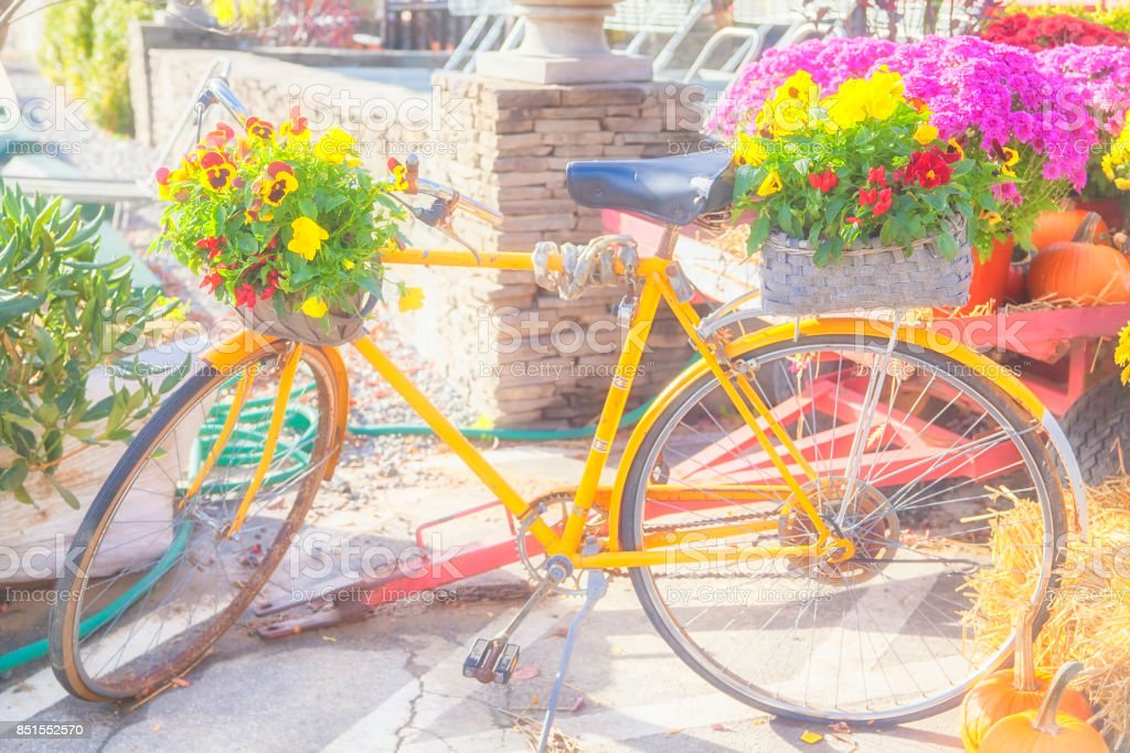 Yellow bicycle with pansy flowers stock photo
