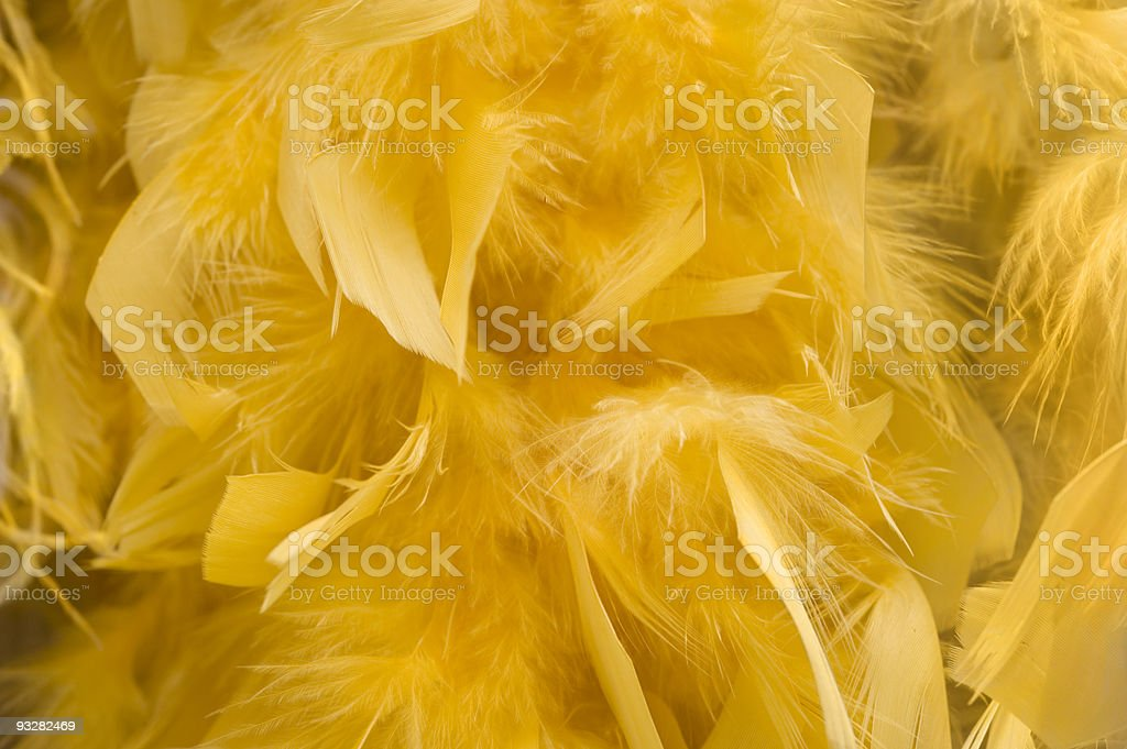 Yellow boa background royalty-free stock photo