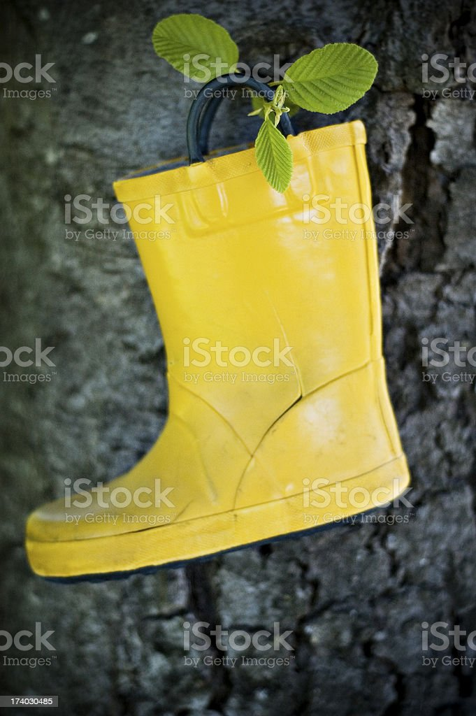 yellow boot in tree royalty-free stock photo
