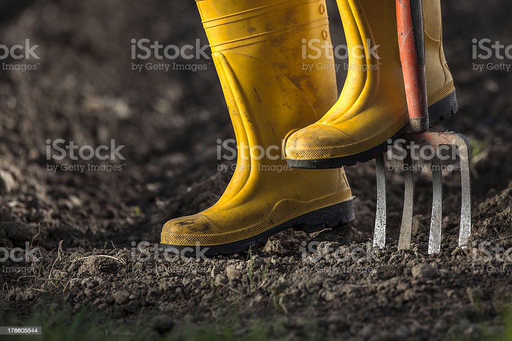 Yellow boots in a garden stock photo