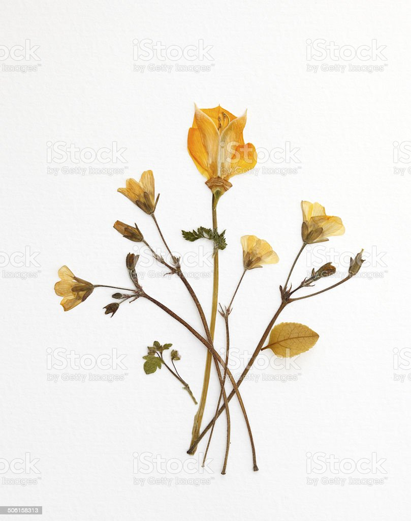 Yellow Bouquet stock photo