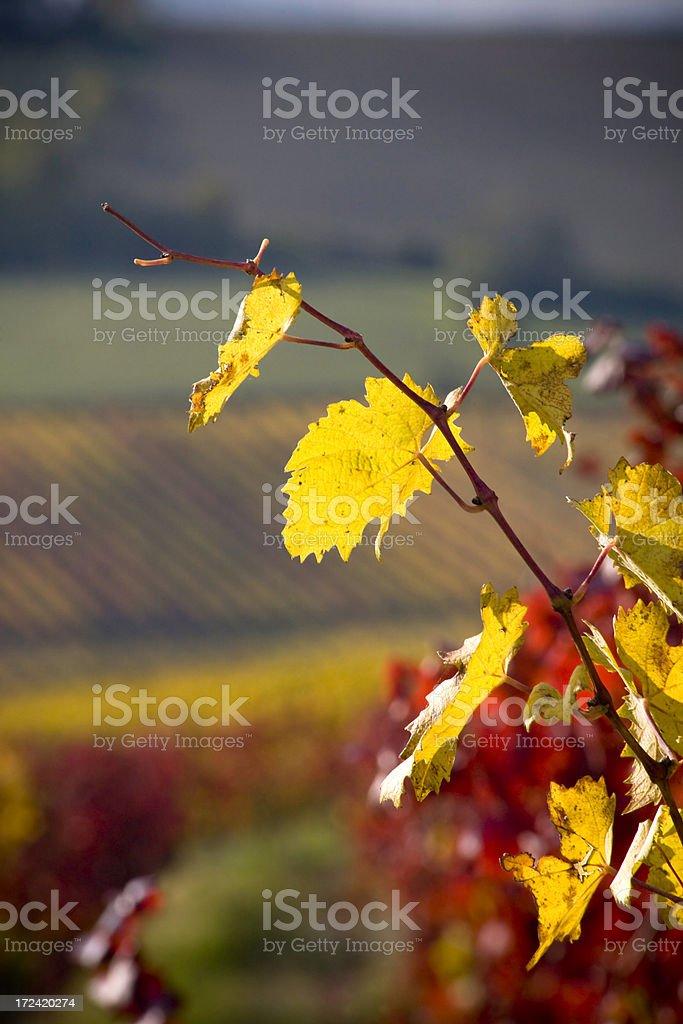 yellow branch royalty-free stock photo