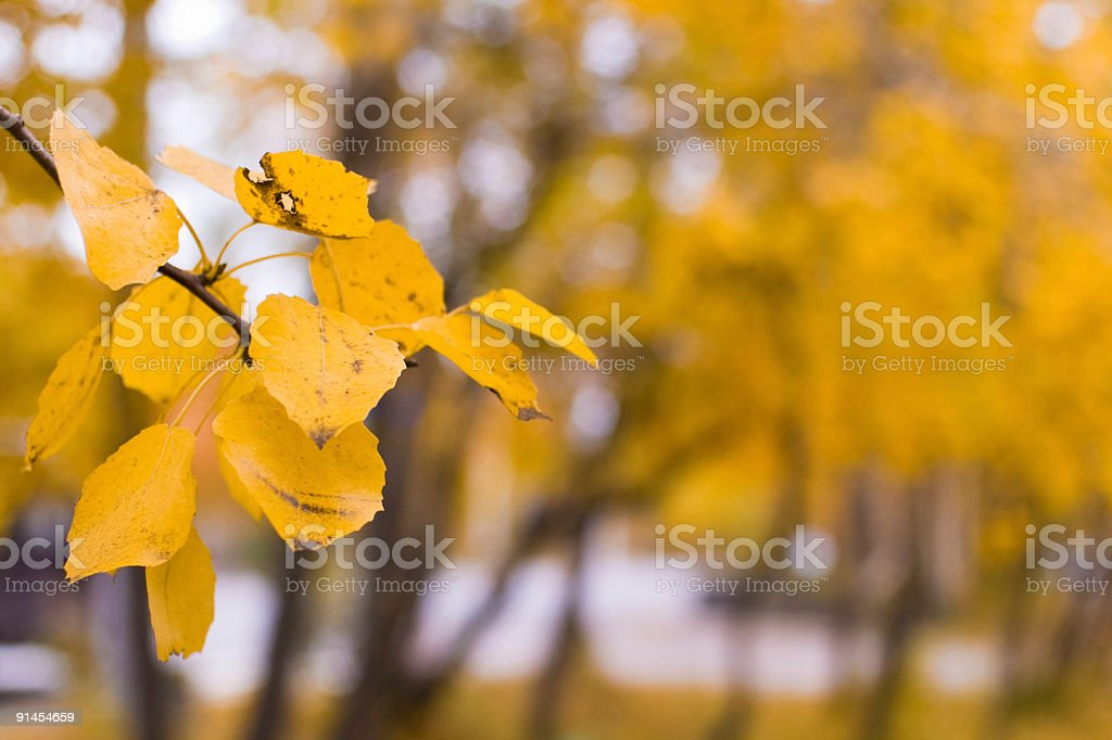 Yellow branch royalty-free stock photo
