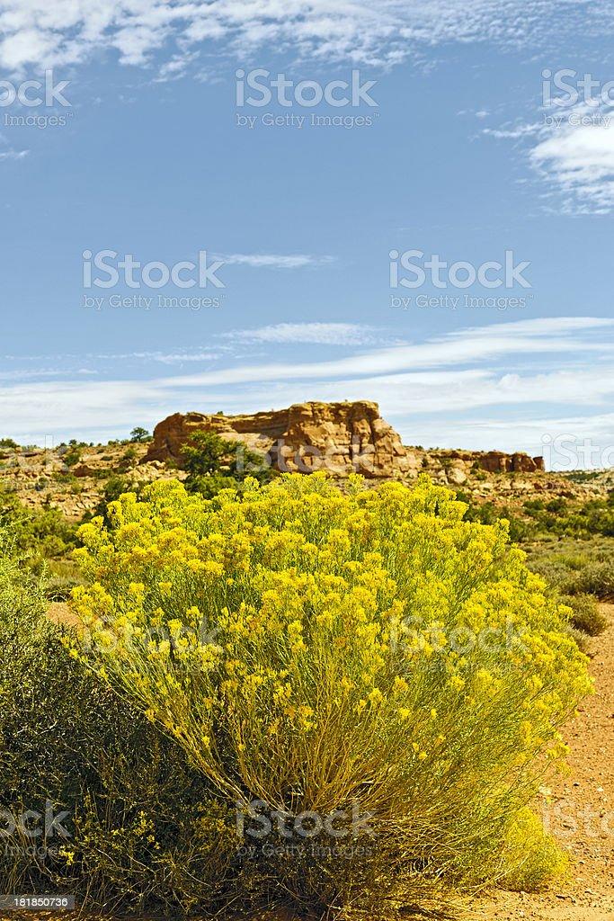 Yellow Bush in Mineral Canyon Utah USA royalty-free stock photo