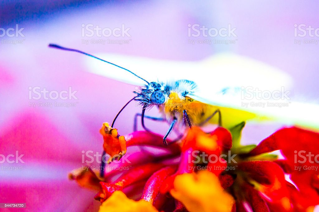 Yellow buterfly above the flower stock photo