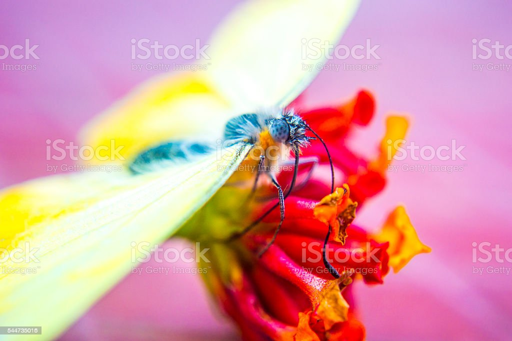 Yellow buterfly above the flowert left side stock photo